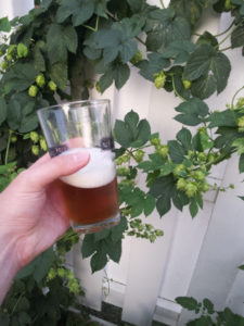 Half Empty Beer Glass in Hand with Hops Growing on Fence